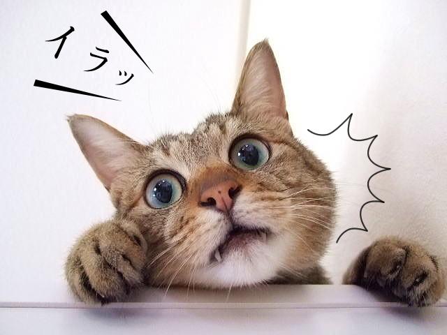 イラっとする猫