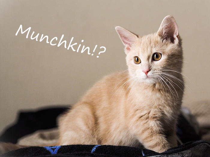 MarketoのMunchkinは猫のマンチカンにあらず
